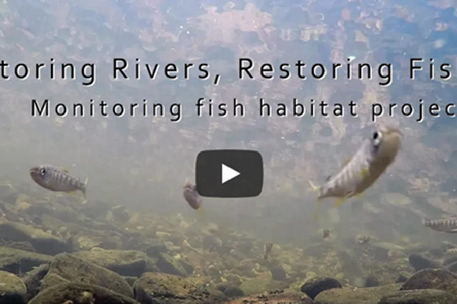 Restoring Rivers, Restoring Fish